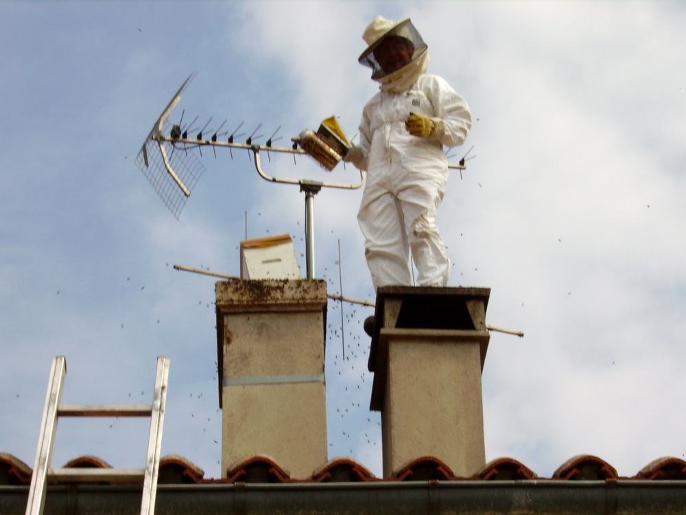 apiculture 005.jpg